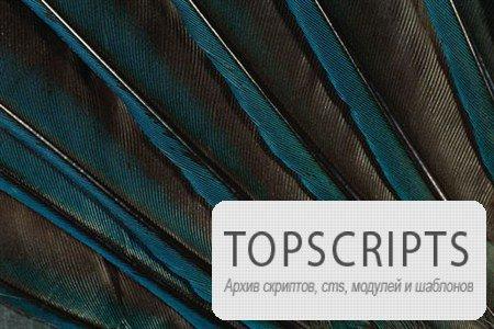 Растровые клипарты цветных перьев превосходных птиц