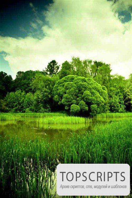 Фото деревьев, растущих на берегу рек