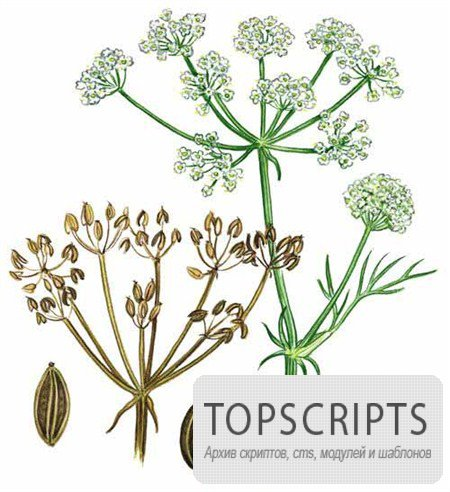 Прекрасные изображения лечебных трав и растений